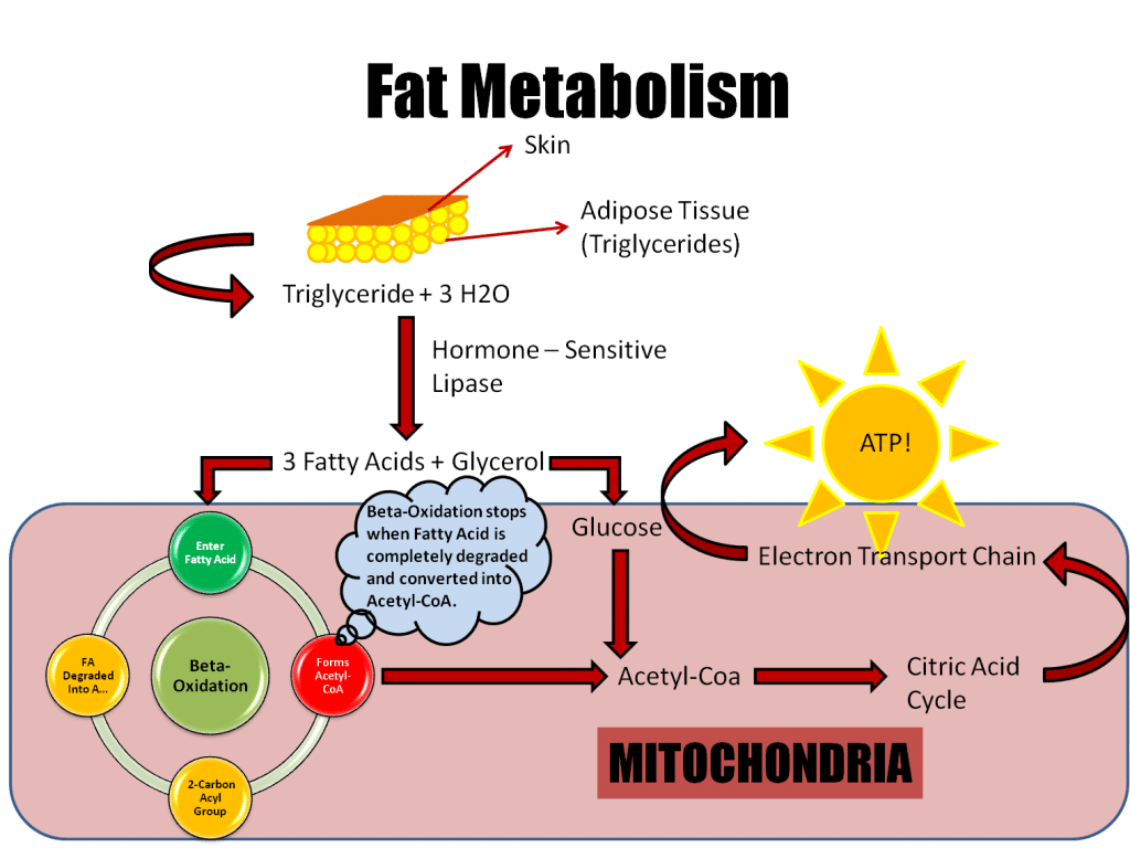 Ways to Increase Your Metabolism - wikiHow