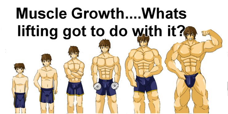 muscle growth1