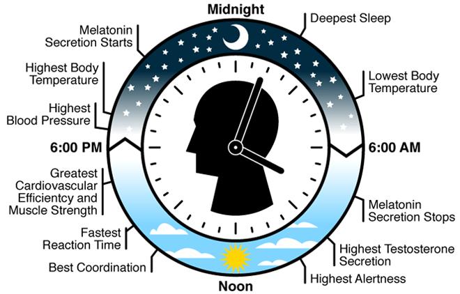biological-clock-660x422