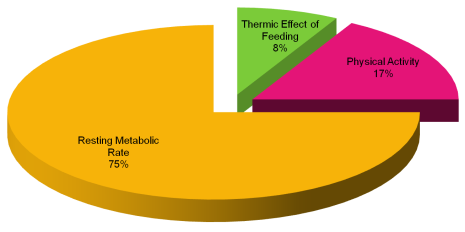 Sedentary-energy-expenditure.png